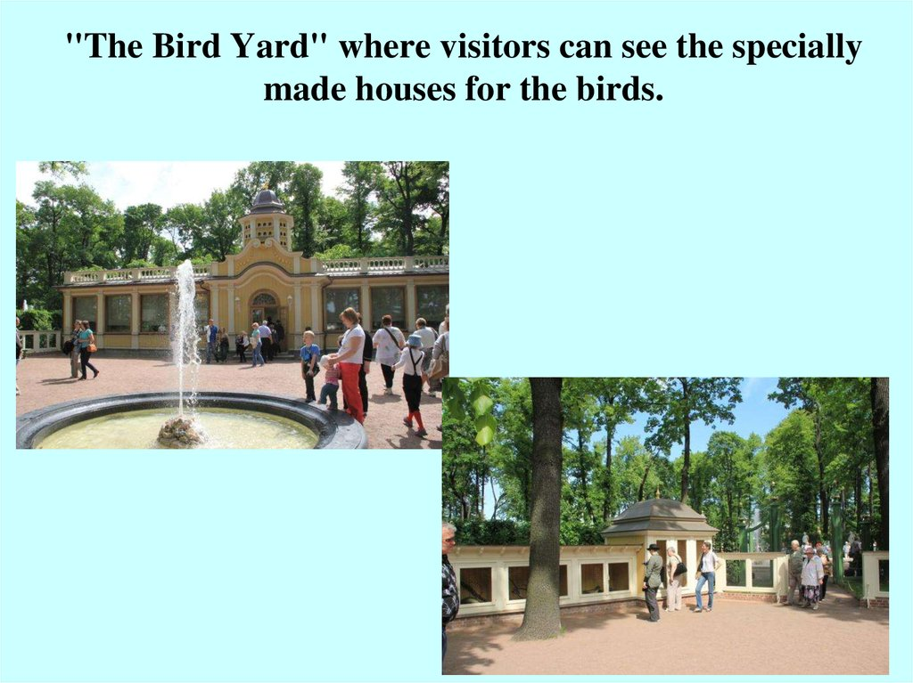 """The Bird Yard"" where visitors can see the specially made houses for the birds."