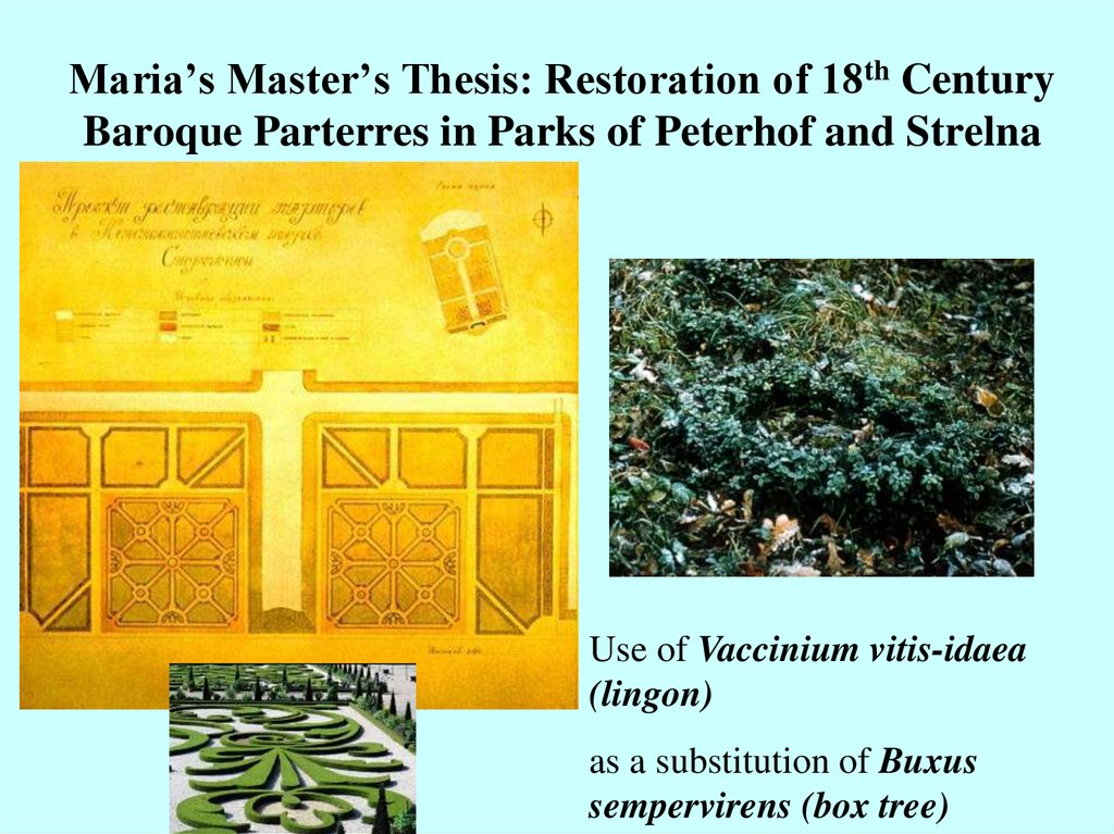 Maria's Master's Thesis: Restoration of 18th Century Baroque Parterres in Parks of Peterhof and Strelna