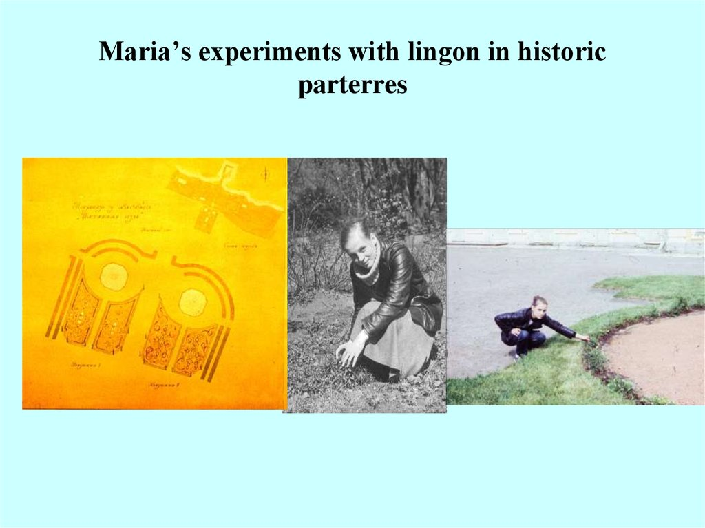 Maria's experiments with lingon in historic parterres