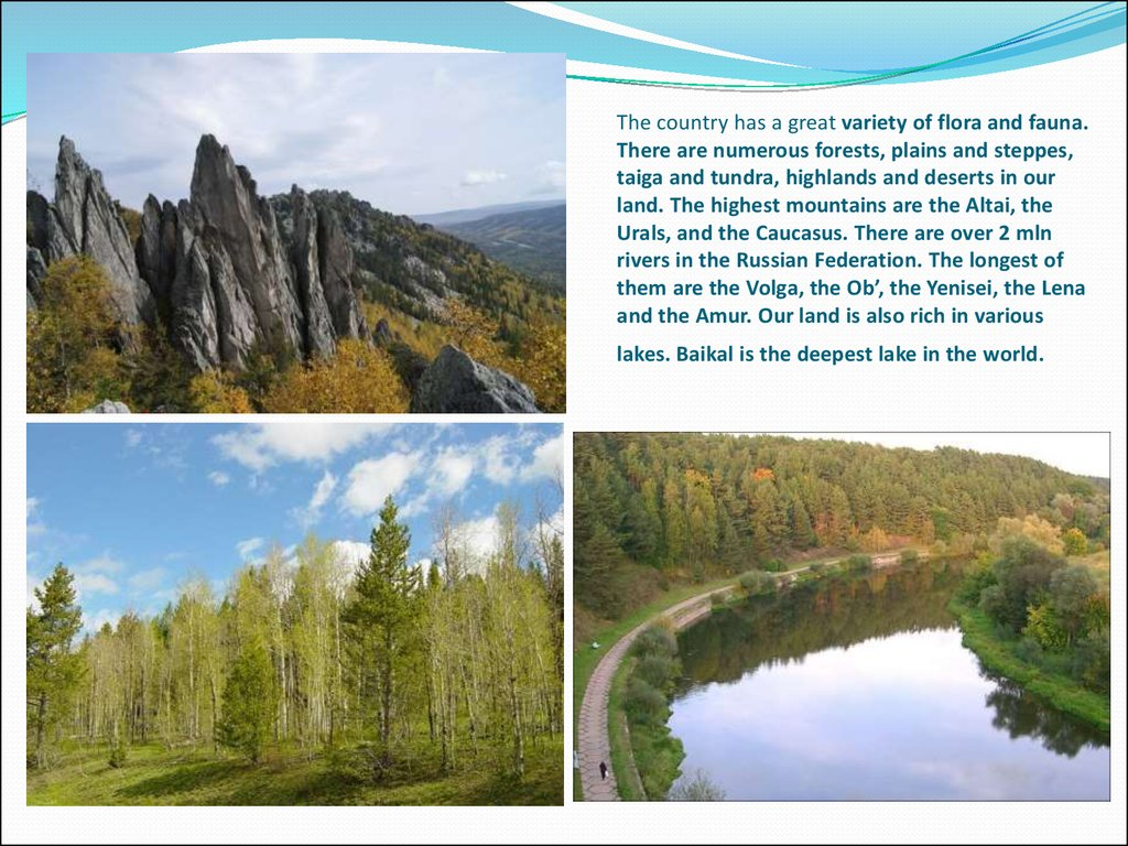 The country has a great variety of flora and fauna. There are numerous forests, plains and steppes, taiga and tundra, highlands and deserts in our land. The highest mountains are the Altai, the Urals, and the Caucasus. There are over 2 mln rivers in the R