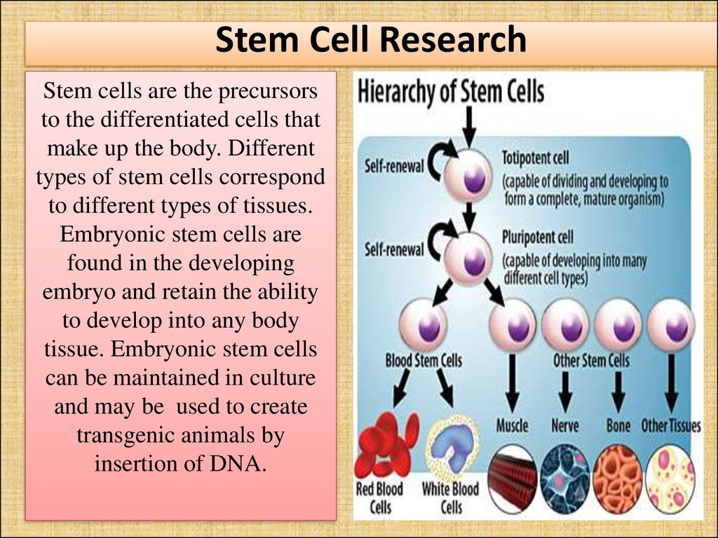 stem cell research should it be permitted Stem cell research stem cells are primal cells found in all multi-cellular organisms, thus in all humans we can permit human stem cell research and that if it is morally permissible to destroy or use should permit the stem cell which can still make the arguments against stem cell research.