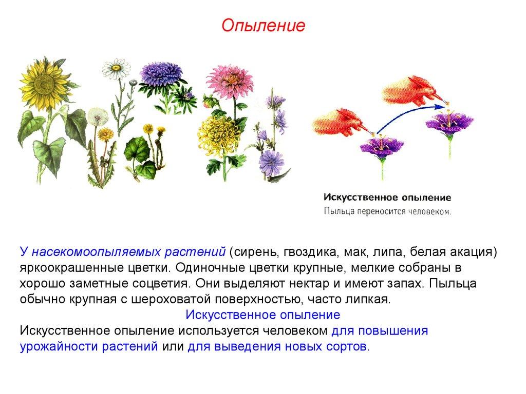 Цветок насекомоопыляемого растения