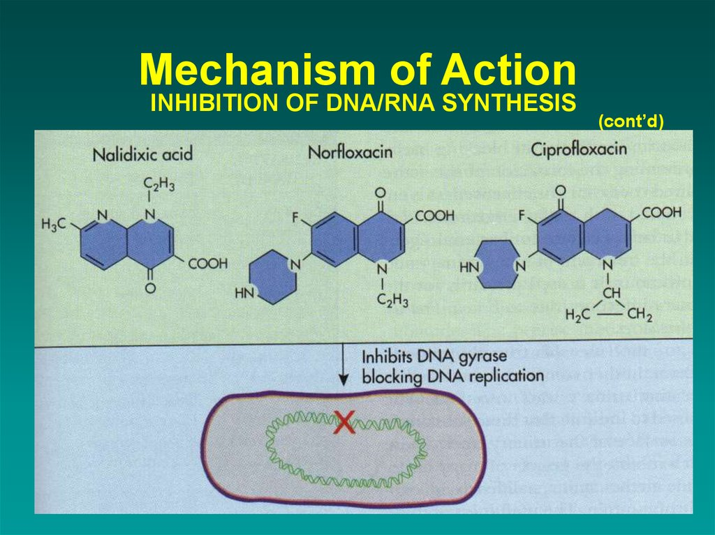 Mechanism of Action INHIBITION OF DNA/RNA SYNTHESIS
