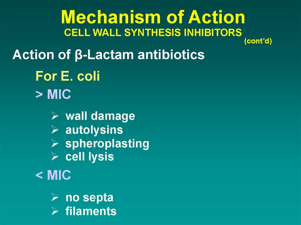 Mechanism of Action CELL WALL SYNTHESIS INHIBITORS