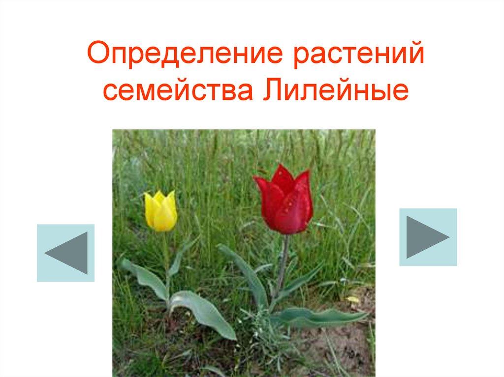 определить цветок по фото онлайн