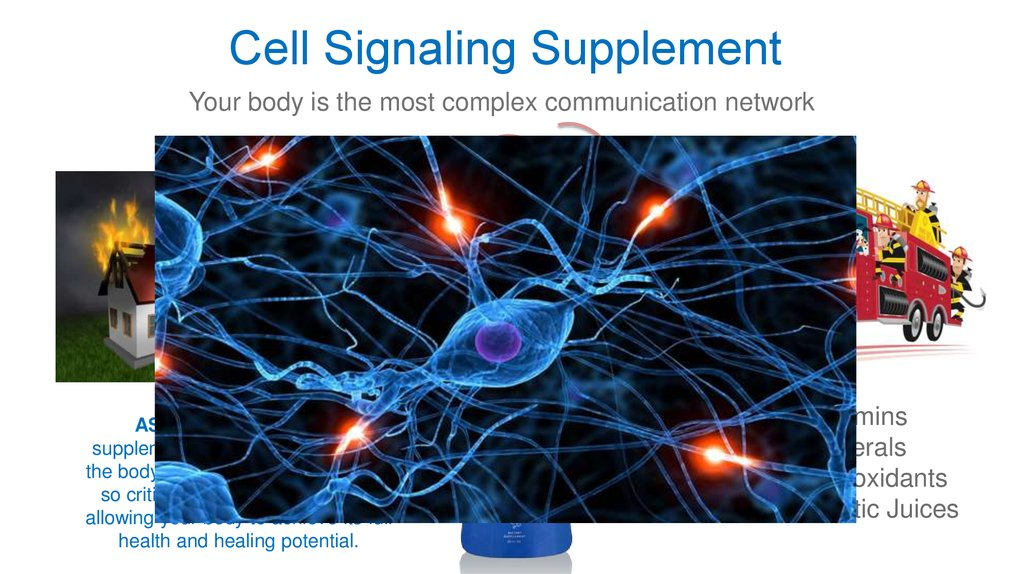 Cell Signaling Supplement