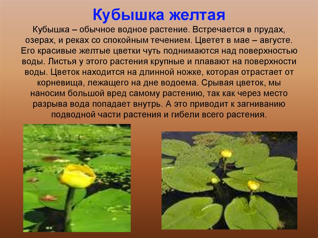 book Математика. Тематические тесты. 5 класс 2011