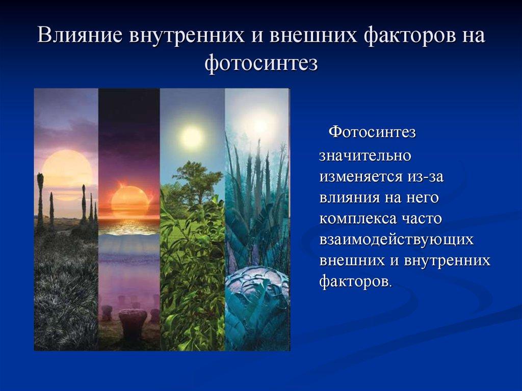 информация восстановлению, фотосинтез от внутреннего и внешних факторов объявления