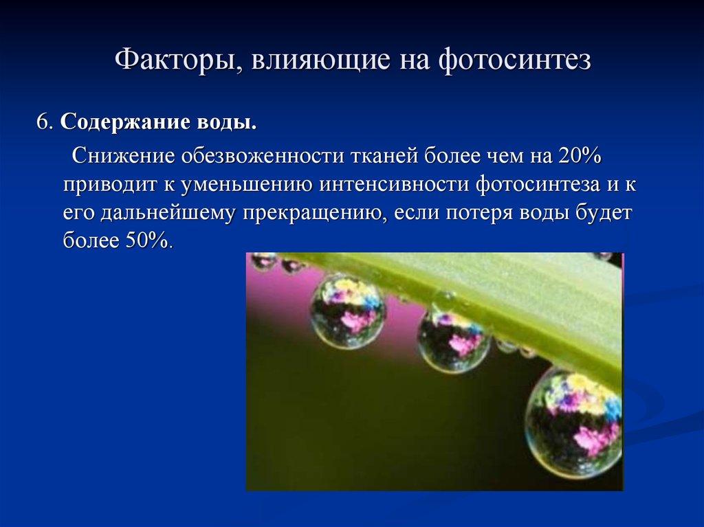 как другие к внешним факторам фотосинтеза относится чего много хорошего