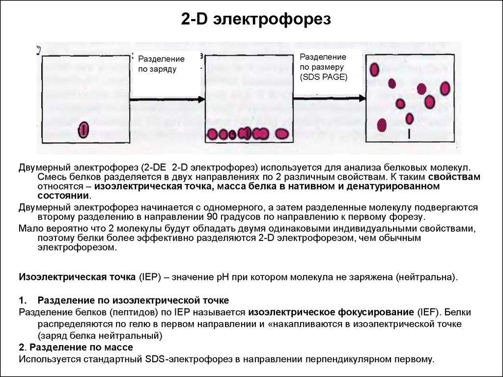 Электрофорез белка анализ крови медицинская справка на права мопедом
