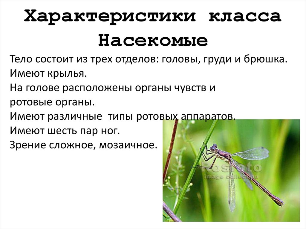 общая характеристика насекомых картинки
