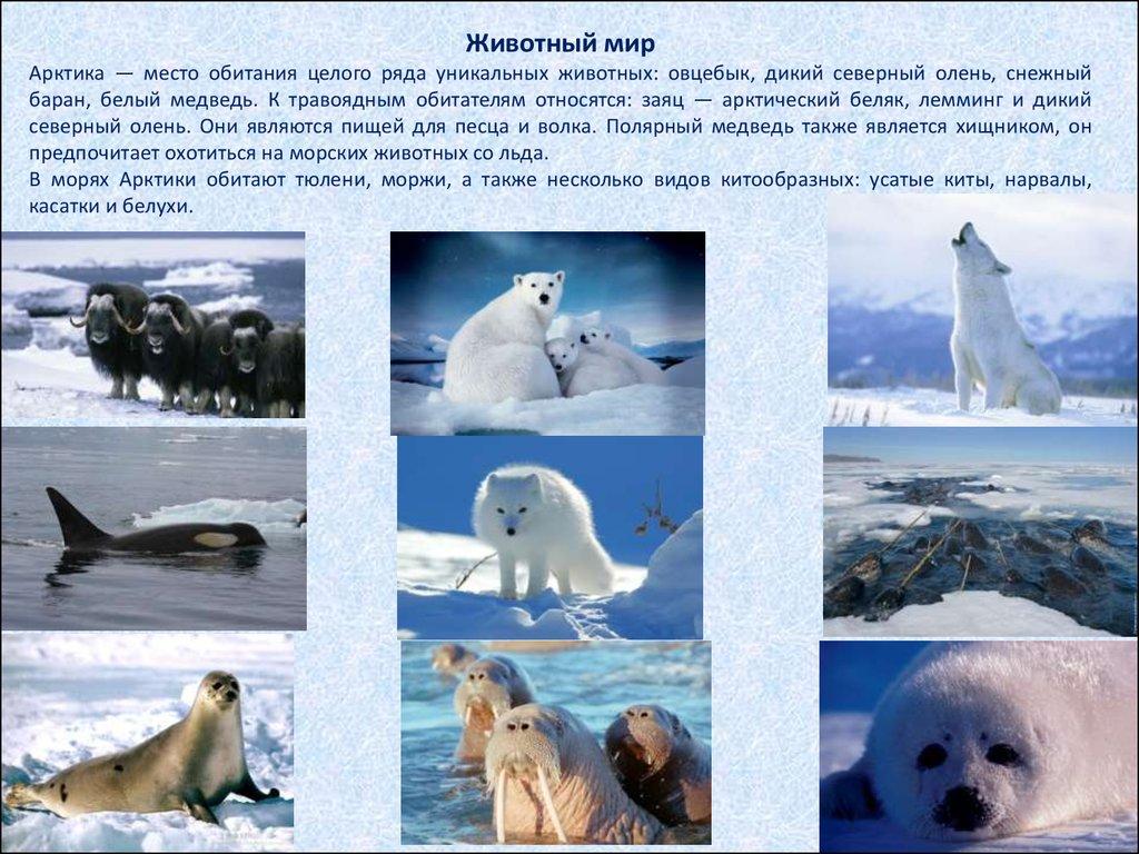 Доклад на тему арктическая пустыня ледяная зона 8027