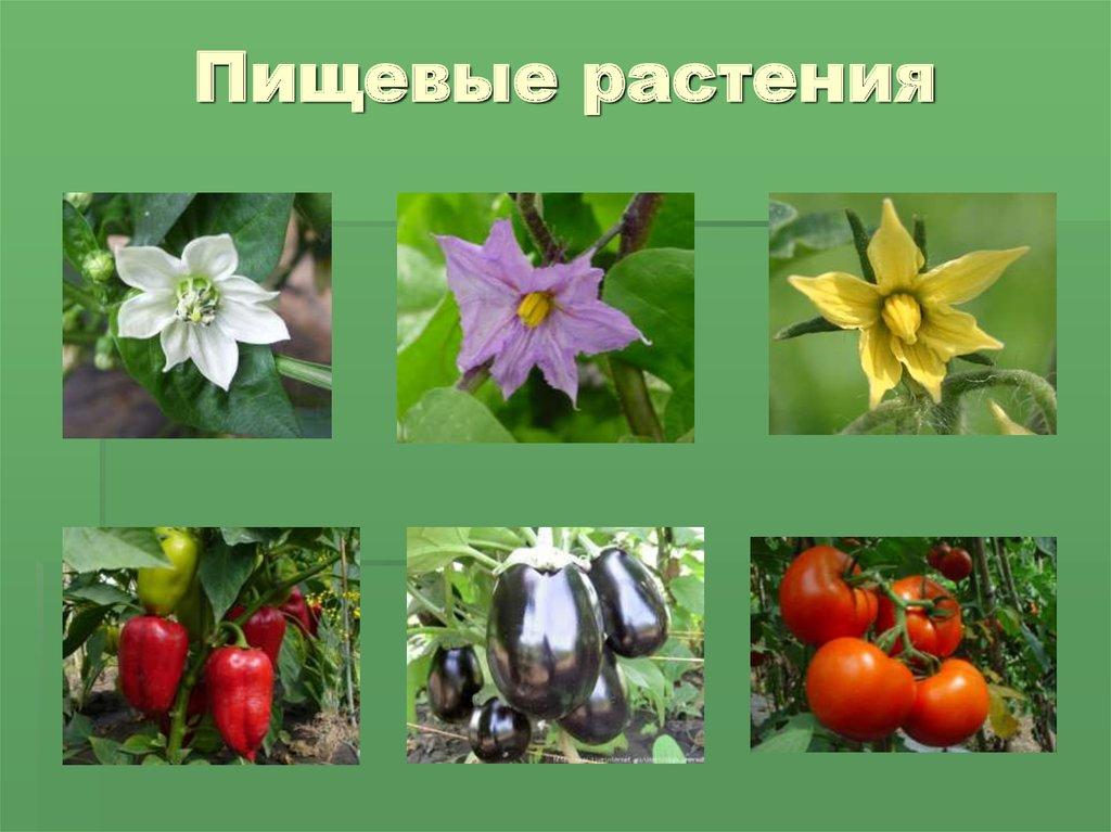 пищевые растения картинка маст-хэв для тех