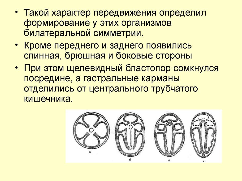 паразиты обитающие в человеке