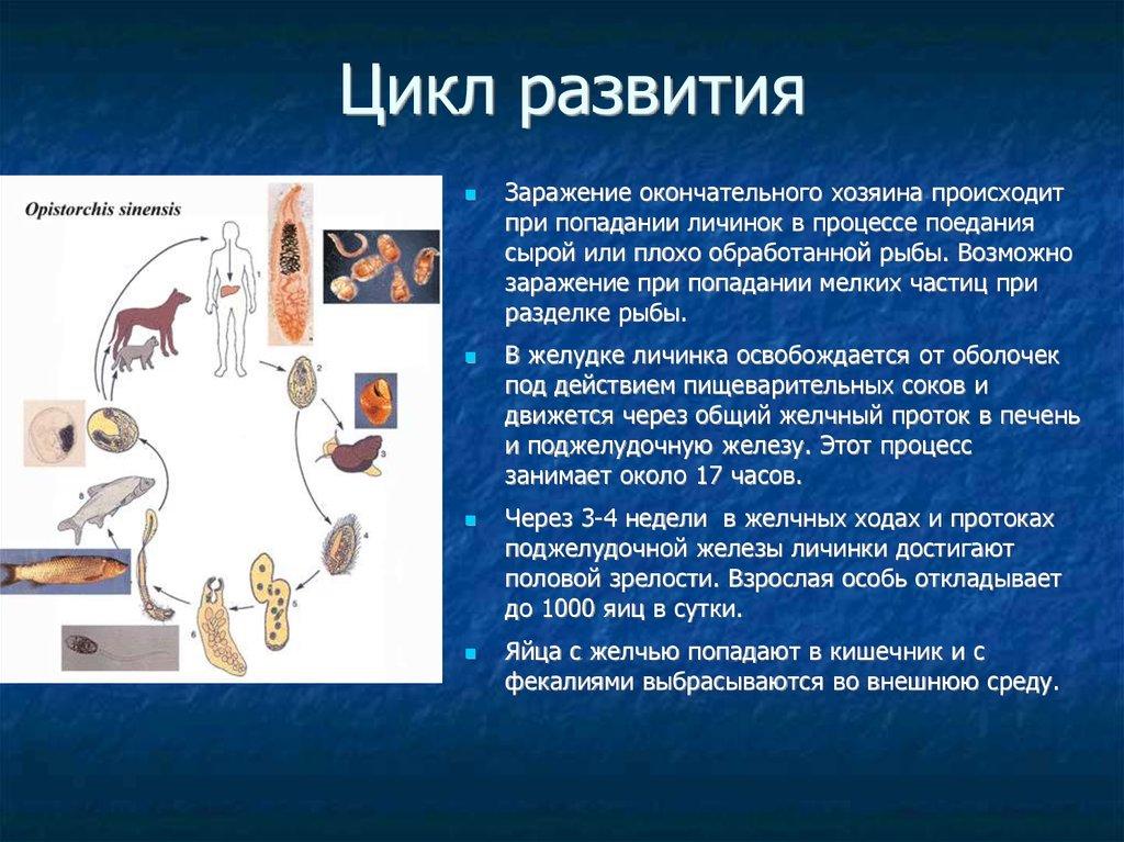 черви у человека в мышцах