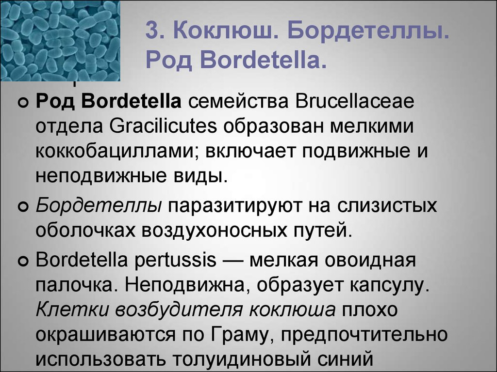 3. Коклюш. Бордетеллы. Род Bordetella.