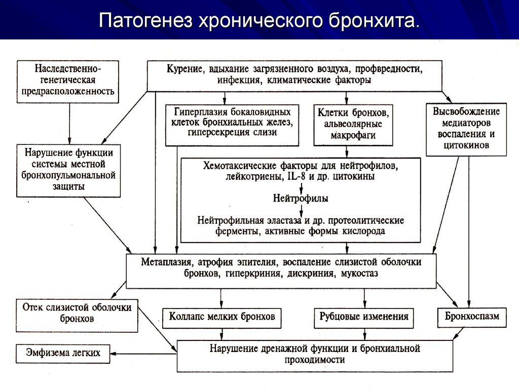 всех семи этиология патогенез и классификация хронического бронхита заключении
