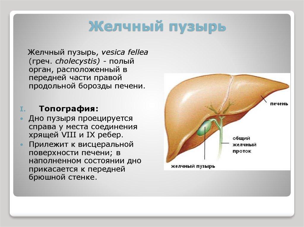 Как остеохондроз влияет на желчный пузырь