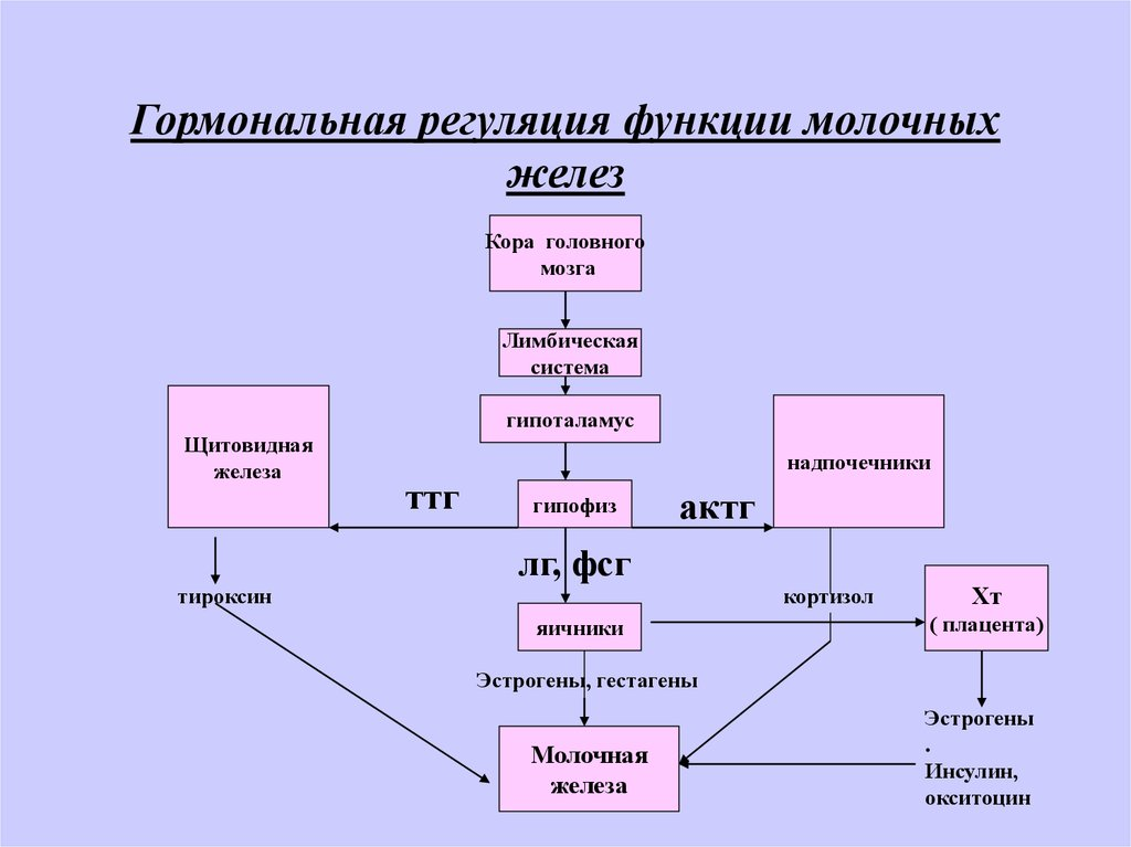 Функция молочной железы