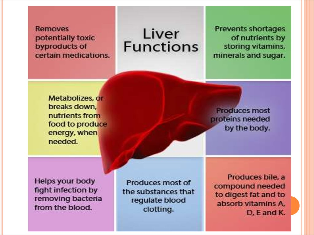 Mmunophysiology Of Liver Immunophysiology Of Liver Functions Of