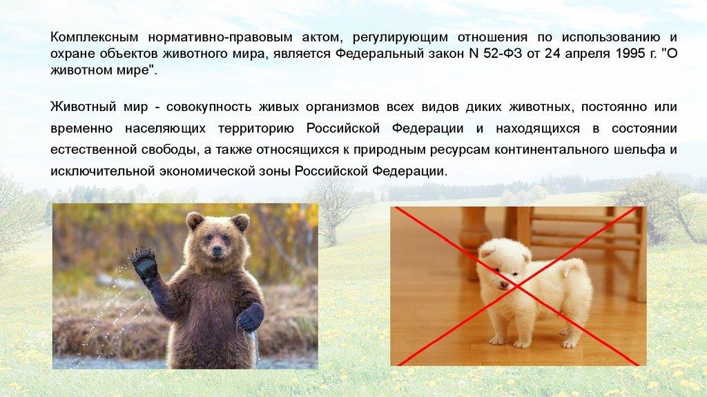 Реферат животный мир как объект охраны и использования 843
