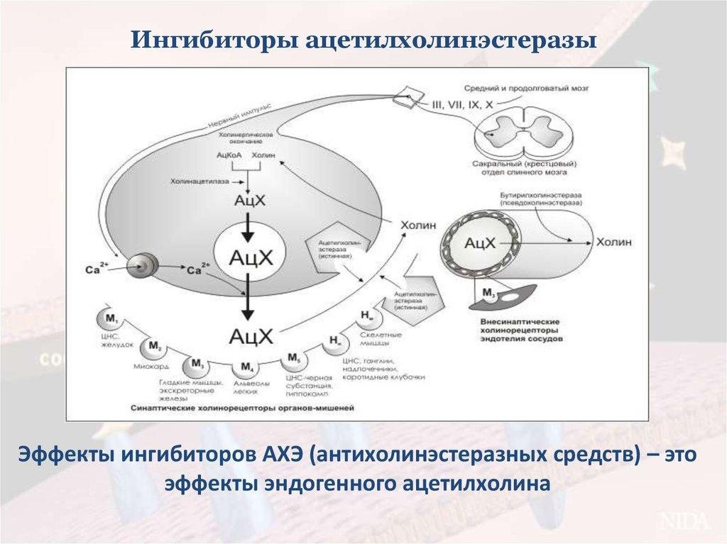 ингибиторы ацетилхолинэстеразы механизм действия