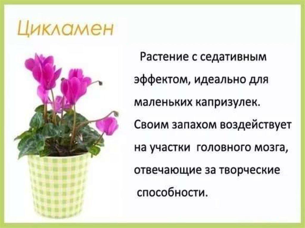 Комнатные цветы которые могут находиться в детской