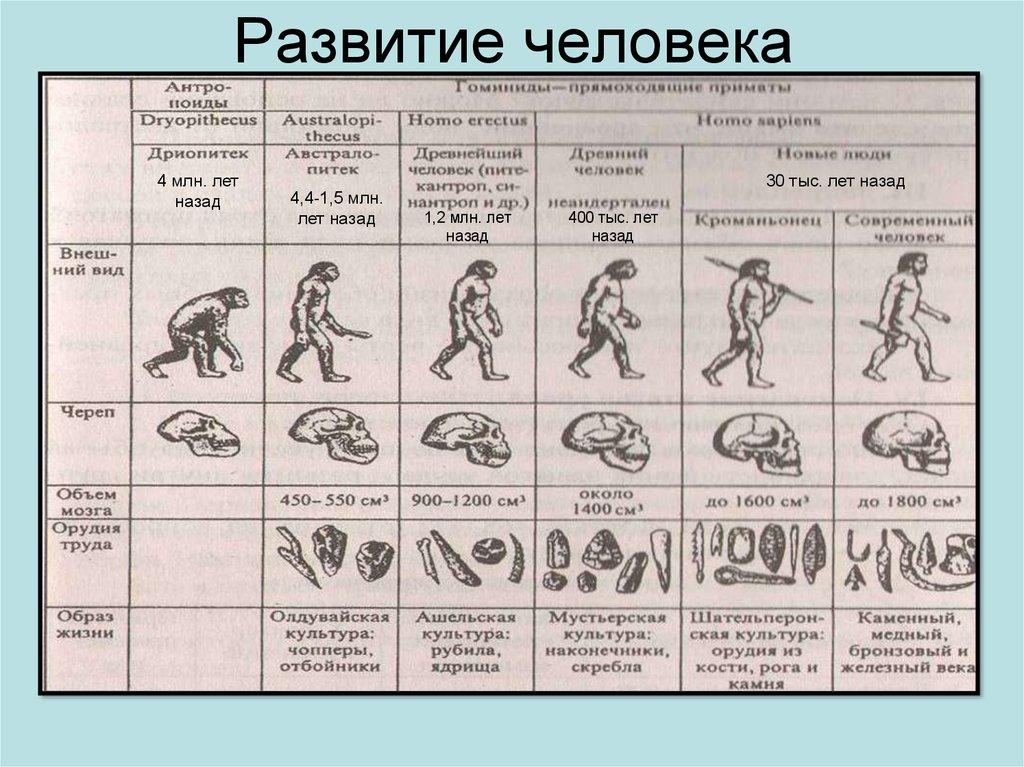 Гдз По Эволюция Человека