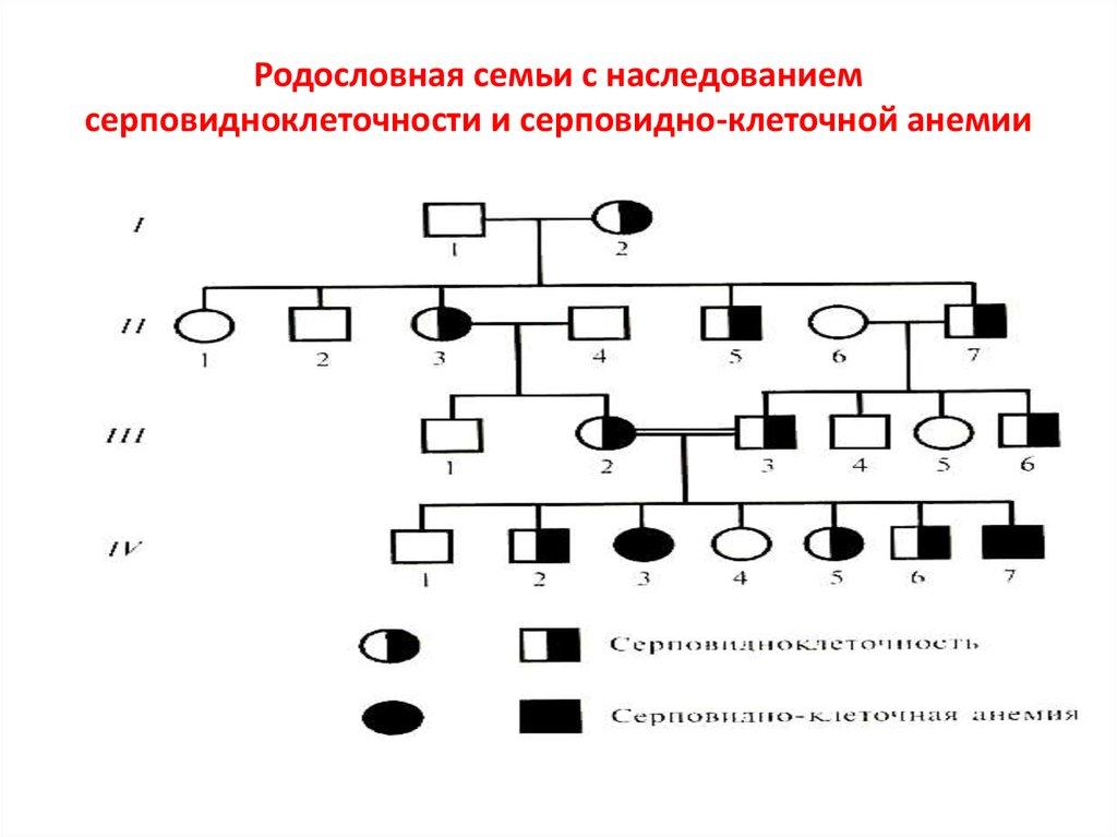 Решение генетических задачи анализ составления родословных решение задач похимии