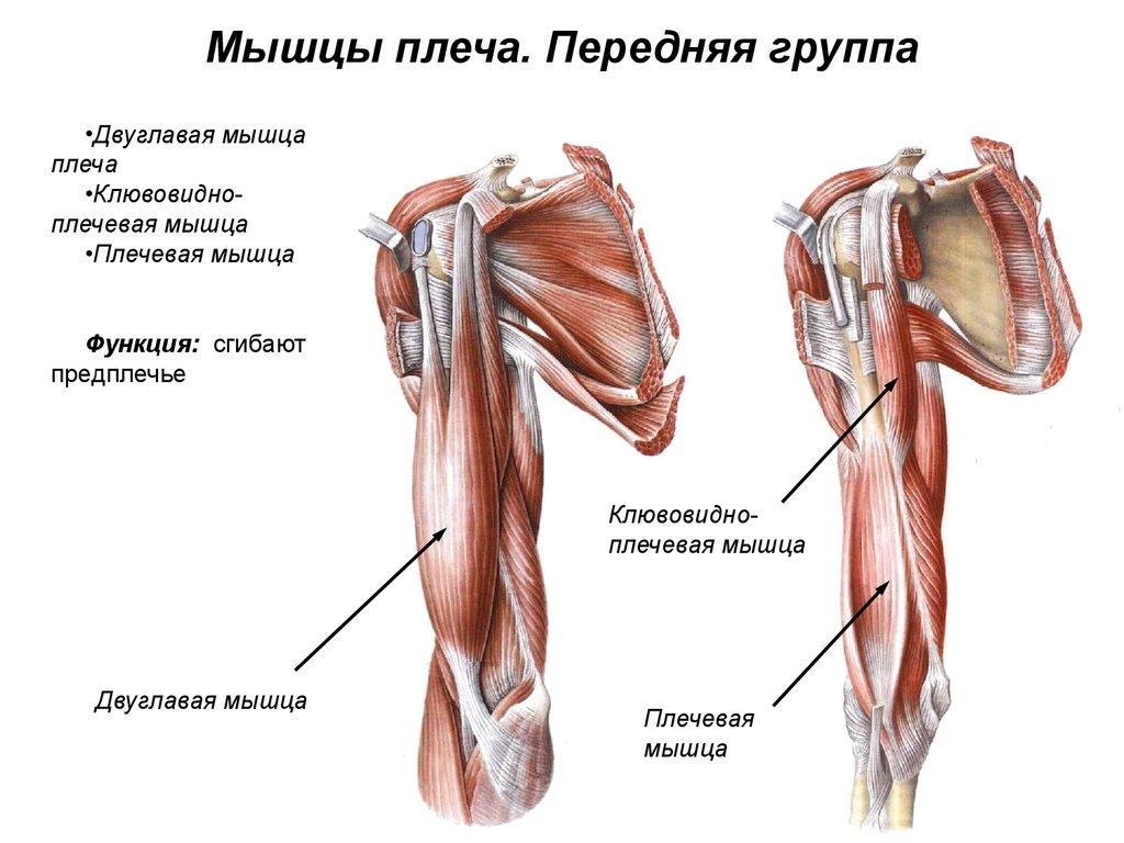 Болит правое плечо спереди