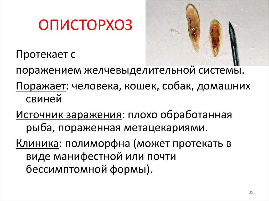 Профилактика описторхоза в картинках