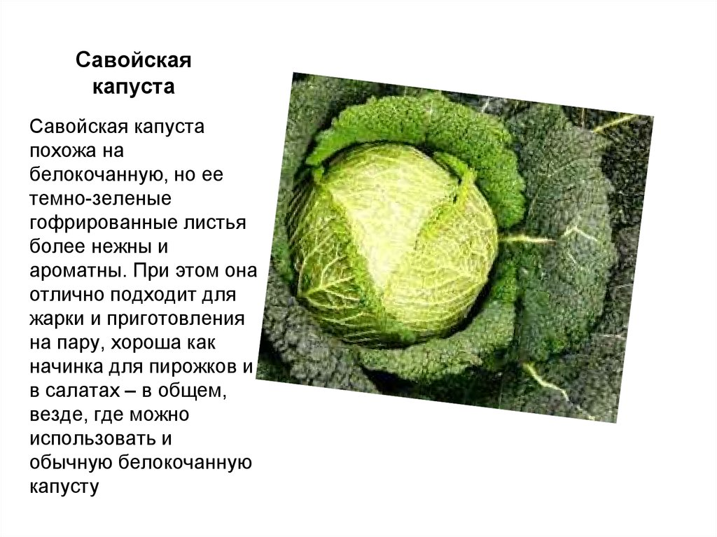 рецепт капуста савойская