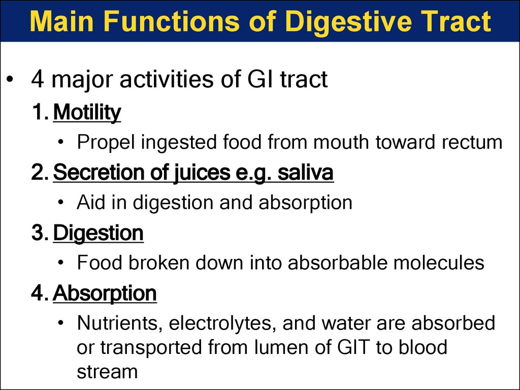 Main Functions of Digestive Tract