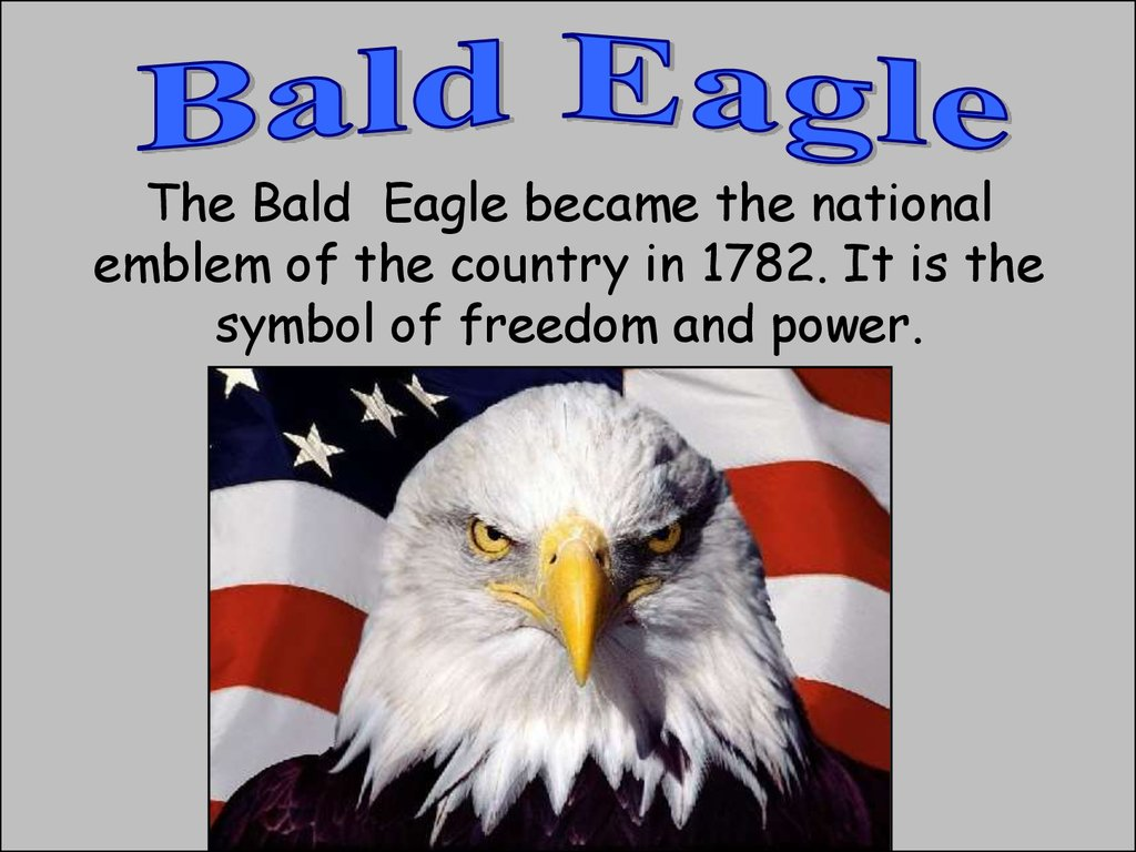 Symbols of the usa online presentation the bald eagle became the national emblem of the country in 1782 it is the symbol of freedom and power biocorpaavc Images