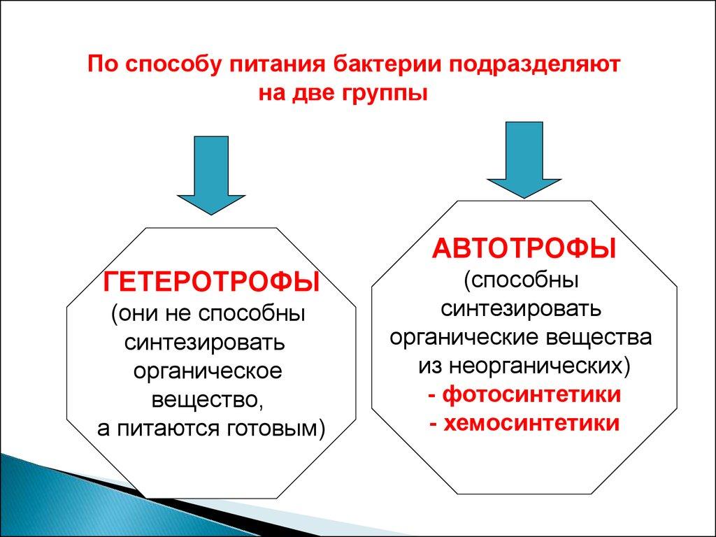 Гетеротрофы не могут жить без автотрофов