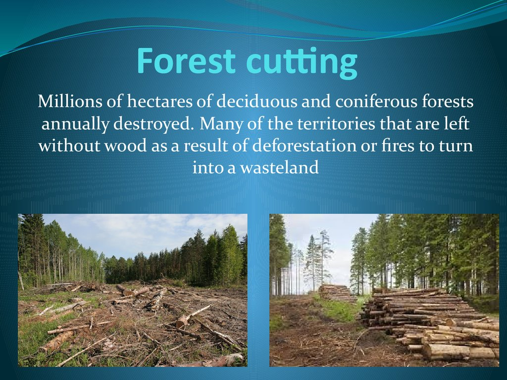 Forest cutting