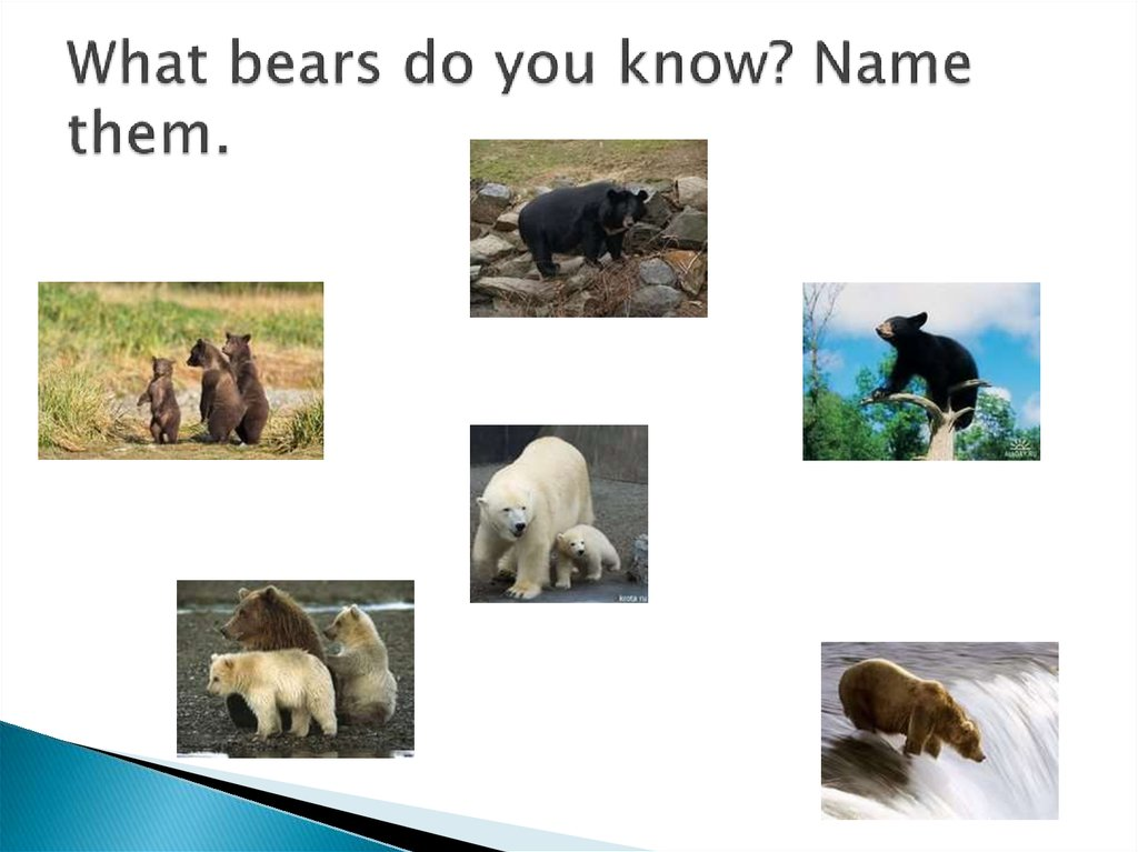 What bears do you know? Name them.