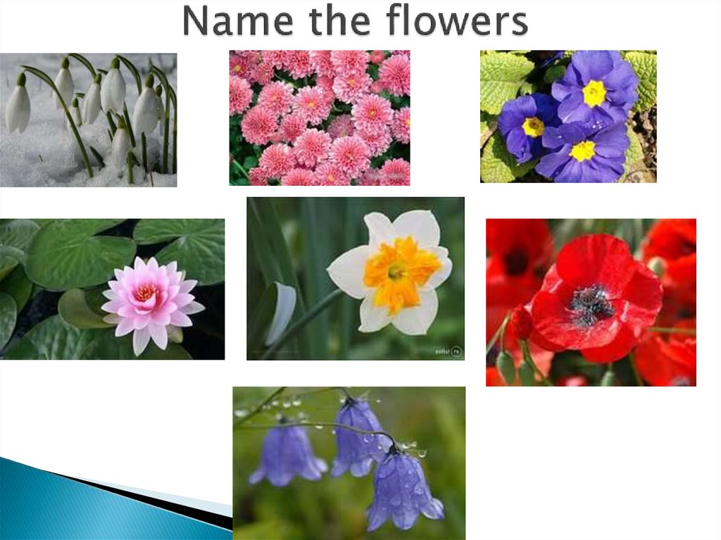 Name the flowers