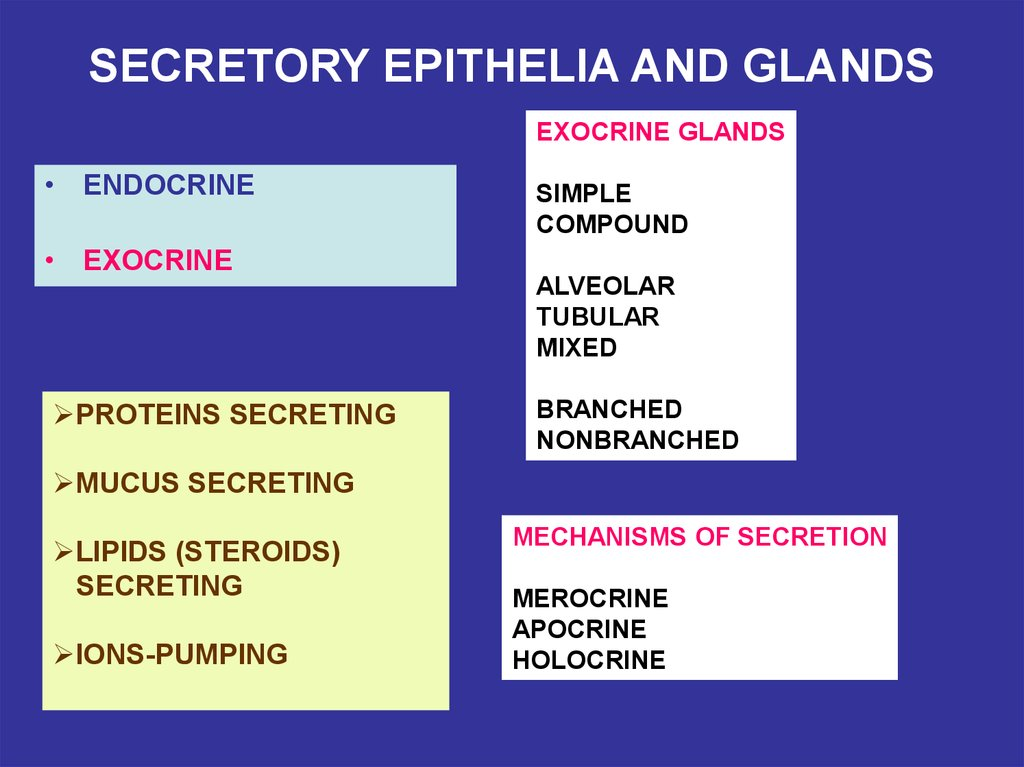 SECRETORY EPITHELIA AND GLANDS