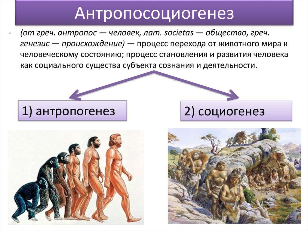 антропосоциогенез и его комплексный характер шпаргалка