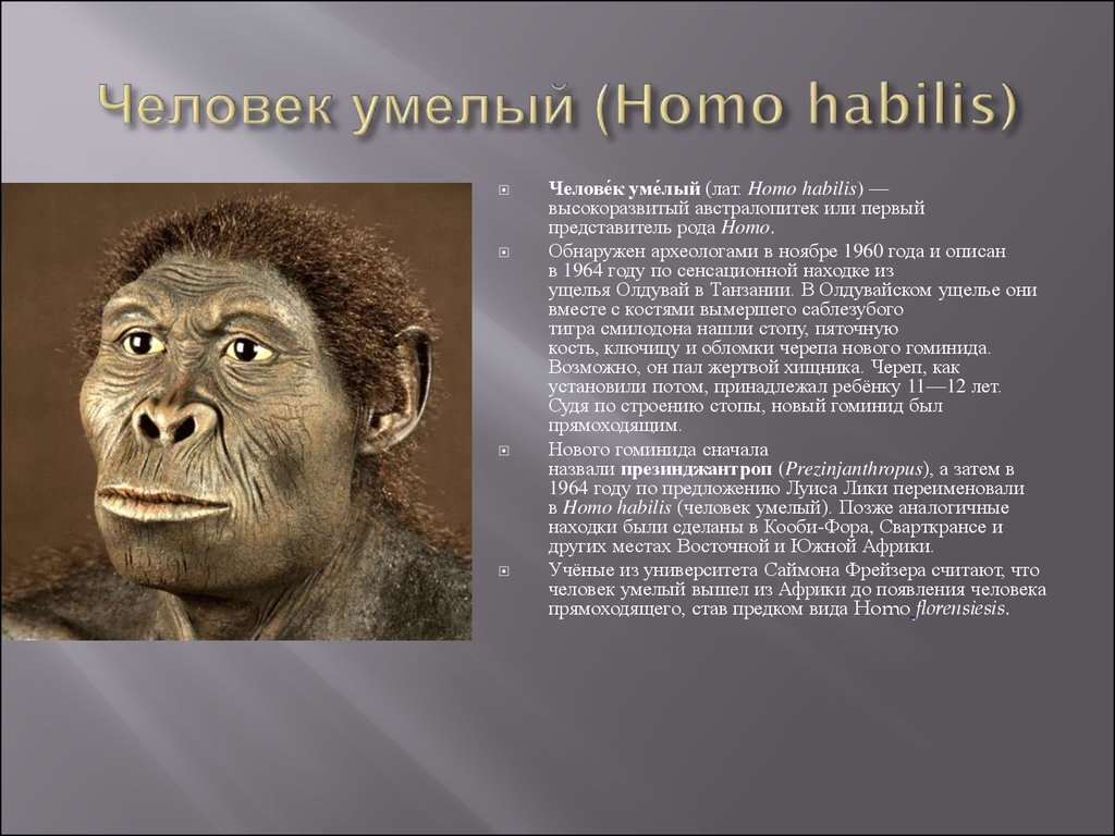 homo habilis Homo rudolfensis (also australopithecus rudolfensis) is an extinct species of the hominini tribe known only through a handful of homo habilis vs homo rudolfensis.