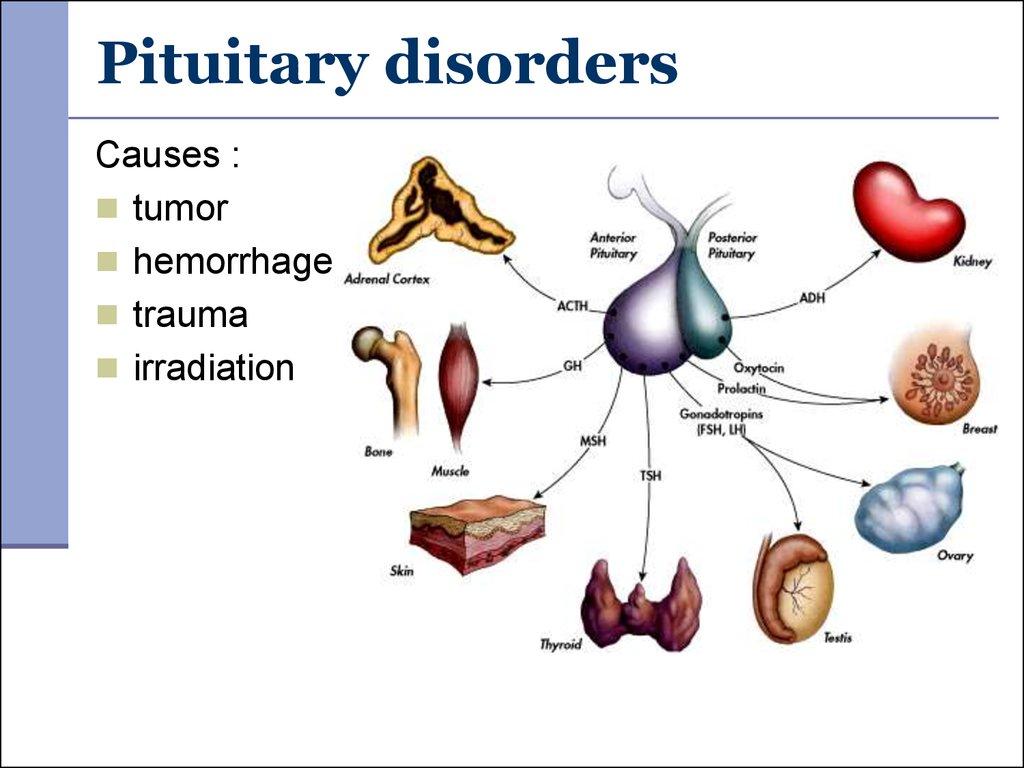 Pathophysiology of endocrine system. (Subject 18
