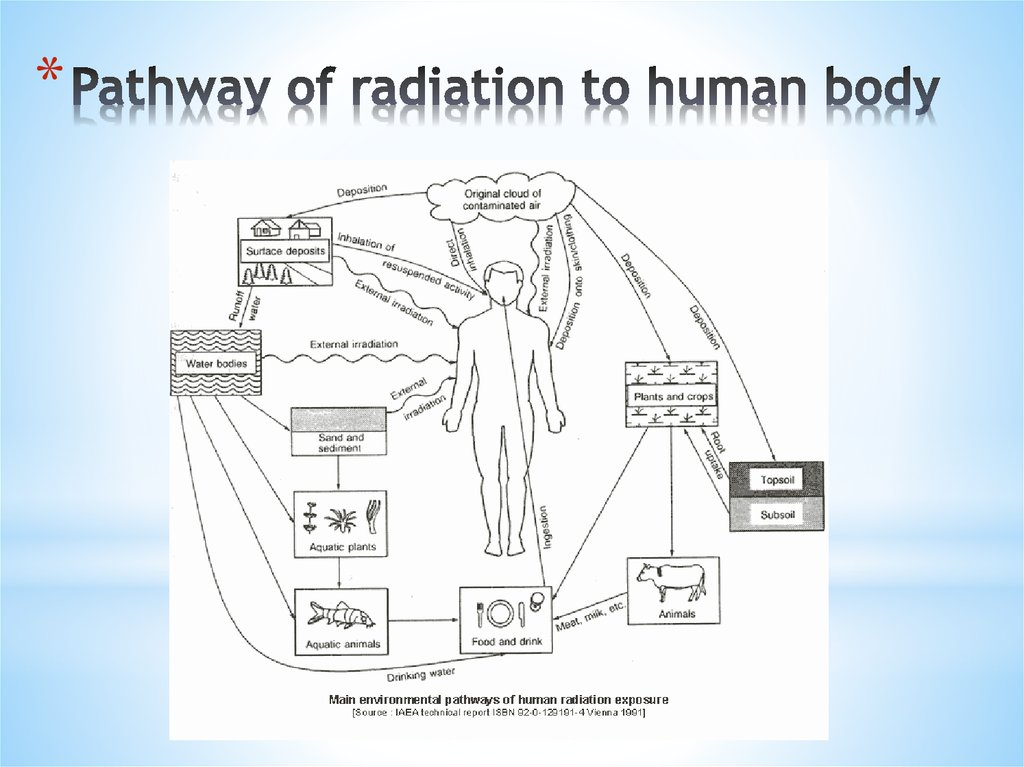 Pathway of radiation to human body