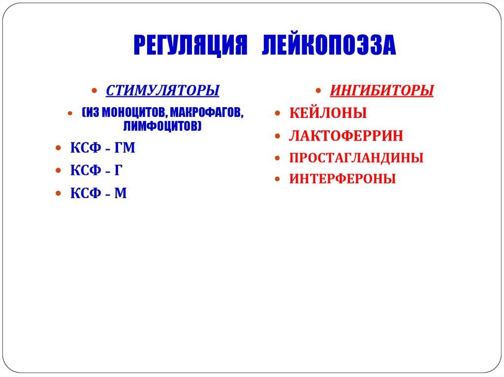 Регуляция лейкопоэза физиология