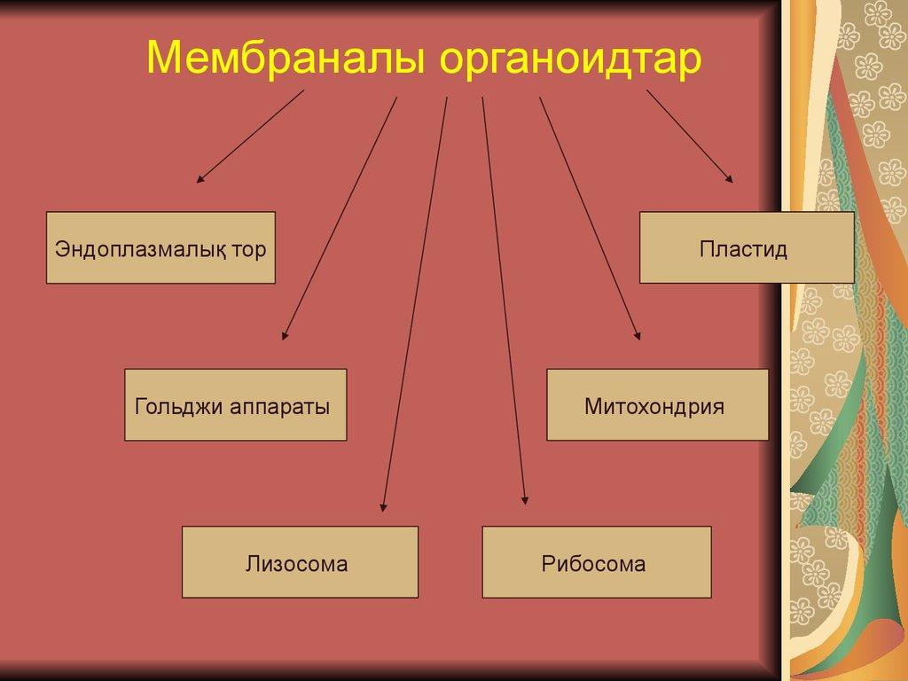 Мембраналы оргонойдтар