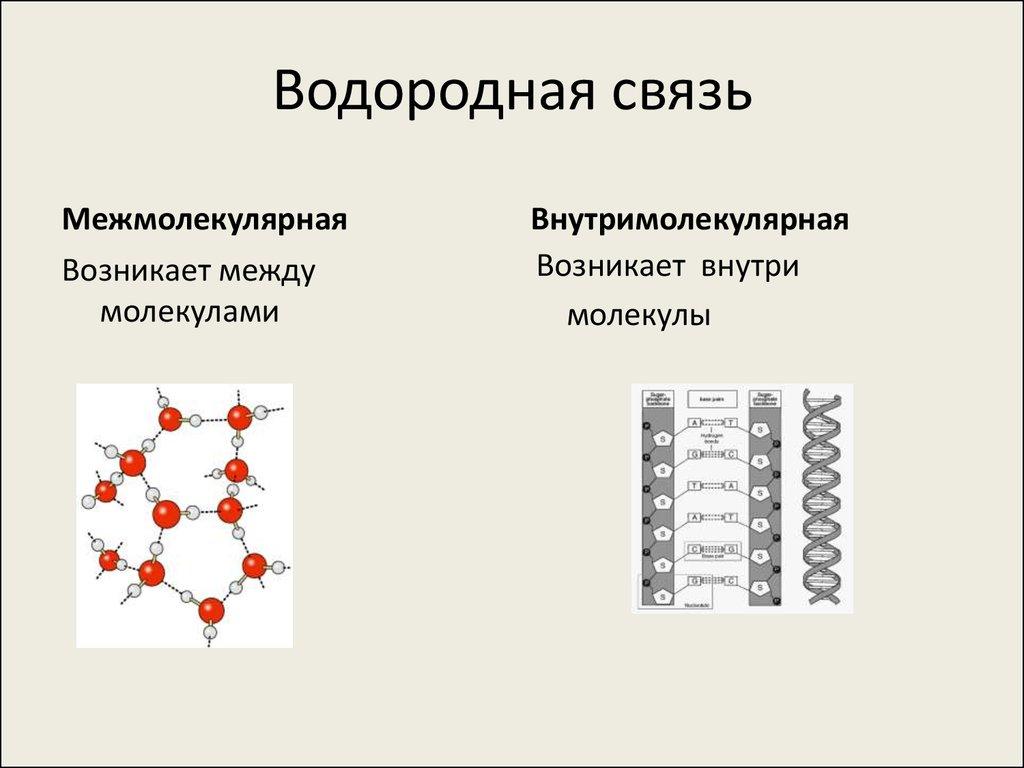 какие соединения могут образовывать водородную связь термобелье фирмы Guahoo