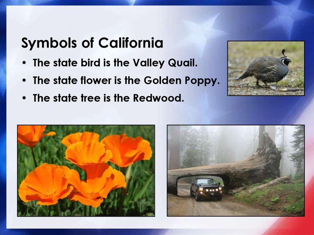 Our 50 States California Online Presentation