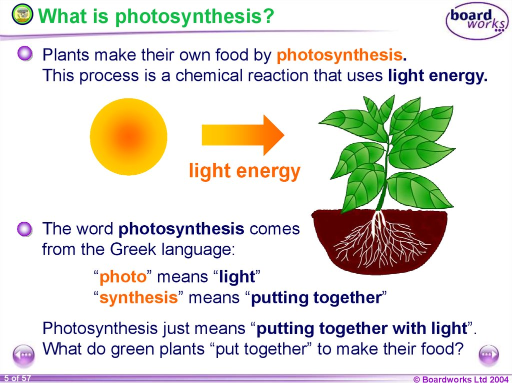 understanding the process of plant photosynthesis Photosynthesis is a process used by plants and other organisms to convert light energy into chemical energy that can later be released to fuel the organisms' activities.
