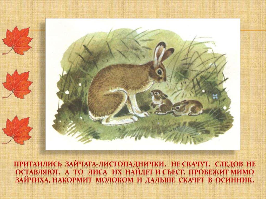 картинки по рассказу листопадничек в белом фоне приворот