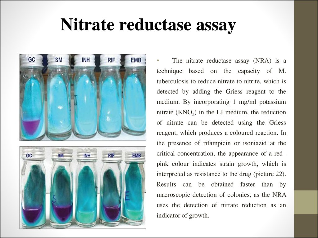 Nitrate reductase assay